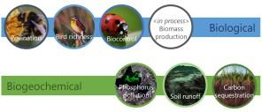 Ecosystem functions