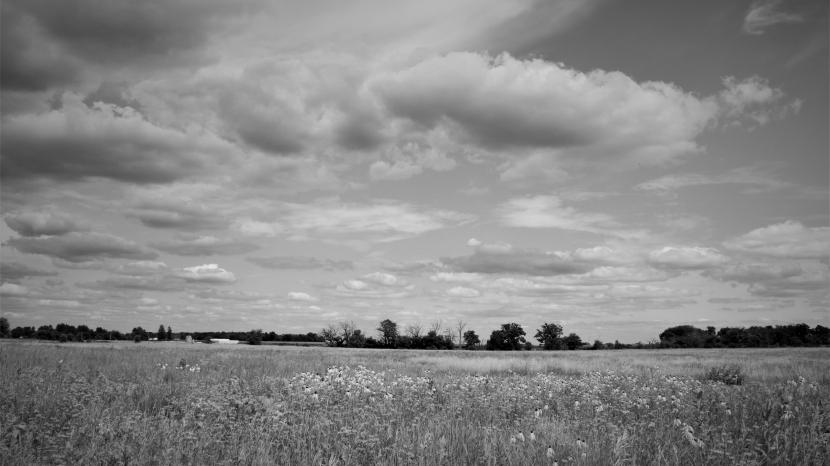 Grassland community & landscapeecology