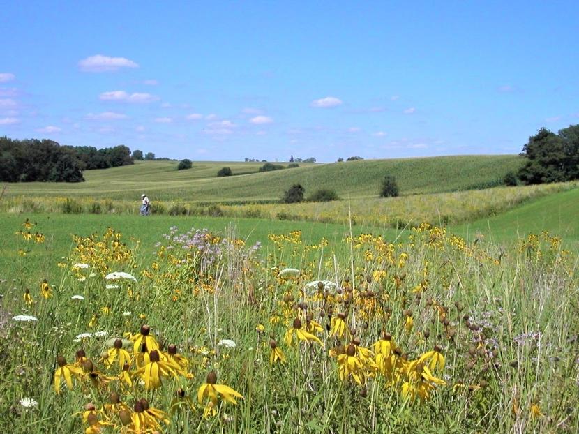 Bioenergy and pollinators: can theycoexist?